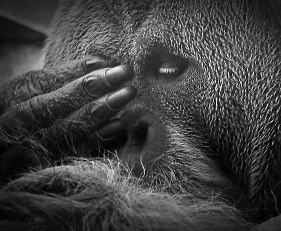 See No Evil by Jon Staniland