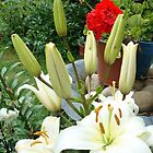 Lillies in a Garden by Journeysinphoto