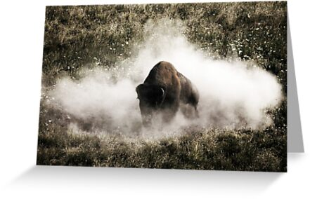 Bison IV by Miles Glynn