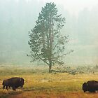 Bison Landscape IV by Miles Glynn