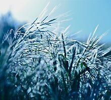 Blue Grass Afternoon by Helen Vercoe