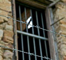 Jailbreak.....or broken? by Helen Vercoe
