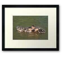 Time for a Chat: Mallard Ducklings Framed Print