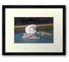 Mute Swan Family Framed Print