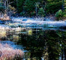 frosty swamp by mlaprade