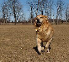 Just Loving His Run! by AliceMc