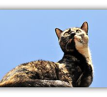 Cat on the Roof by carlosporto