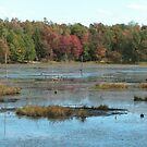 Tooley Pond Marsh by linmarie