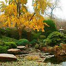Japanese Garden Adelaide by Kelvin  Wong