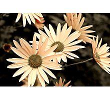 Peachy petals.... Photographic Print