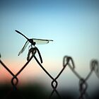 Dragonfly at Dusk by nicolet