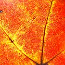 Fall Abstract by Sunshinesmile83