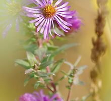 Purple Aster by Jessica Dzupina