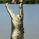 Chomp - salt water croc on Adelaide River, NT by Jenny Dean