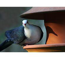 A Shy Rainforest Pigeon Photographic Print