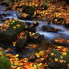 Autumn Pastel by Dragos Dumitrascu