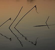 The Reeds by LadyOrdinary