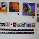 Exhibition of my Work.... by Debbie Steer