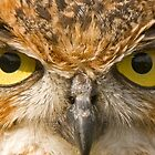 Look Into my Eyes by Ian Salter