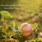 Morning Roses - Psalm 95:6 by Jonicool