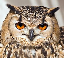 Bengal Eagle Owl (Bubo bengalensis) by Steve  Liptrot
