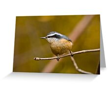 Red Breasted Nuthatch - Ottawa, Ontario Greeting Card