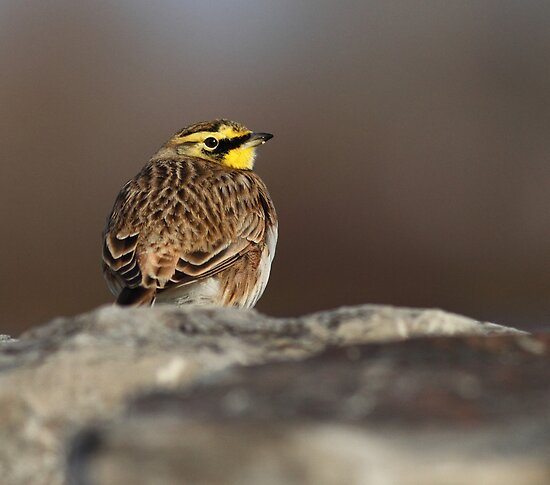 Over the Shoulder Glance by Bill McMullen
