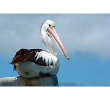 Pelican Pole Sitting Photographic Print