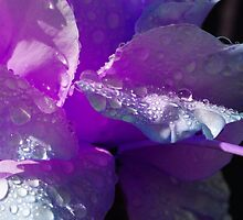 Lavender Dew by Lisa Wood