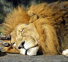 Napping  by Patti Reddoch