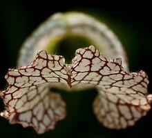 Deadly flower by vasu