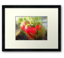 Strawberry Summer Framed Print