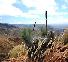 Grass Trees In The Flinders Ranges South Australia. by Deirdreb