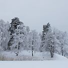 Deep cold trees by LadyFi