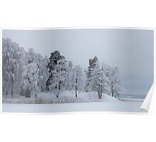 Deep cold trees Poster