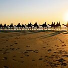 Cable Camels by Emma  Spencer