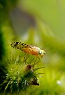 The Little Fly 2 - Macro by Debbie Pinard