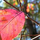Red Leaf by BShirey