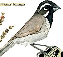 Amphispiza Bilineata (Black-Throated Sparrow) by Carol Kroll