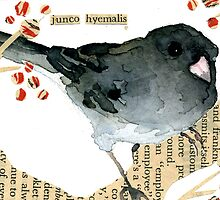 Junco Hyemalis (Dark-Eyed Junco) by Carol Kroll