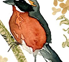 Poospiza Nigrorufa (Black-and-Rufous Warbling Finch) by Carol Kroll