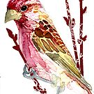 Carpodacus purpureus (Purple Finch) by Carol Kroll