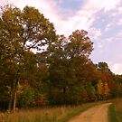 My Autumn Drive by NatureGreeting Cards ©ccwri