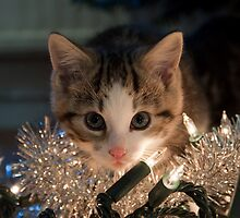Christmas Kitten - butter wouldn't melt... by Ayla Holdom