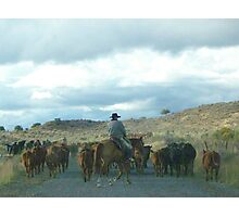 Cattle Drive  Photographic Print