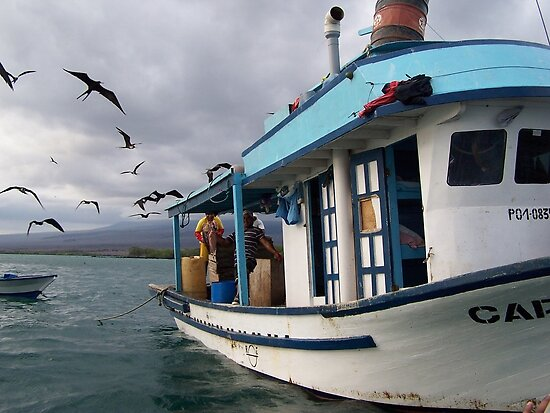 Galapagos Fisherman Attacked by Frigid Birds by Nina Brandin