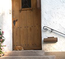 Cat at the door by Heidemarie