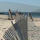Chick's Beach Fencing II by Lesley Rosenberg