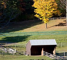 Shed And Fences by phil decocco