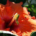 Our Rainforest Garden by Robyn J. Blackford by aussiebushstick